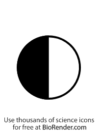 a pedigree symbol of a half-filled circle representing a female carrier